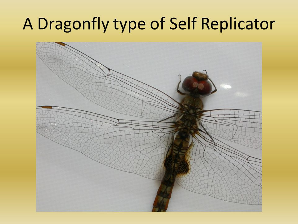 A Dragonfly type of Self Replicator