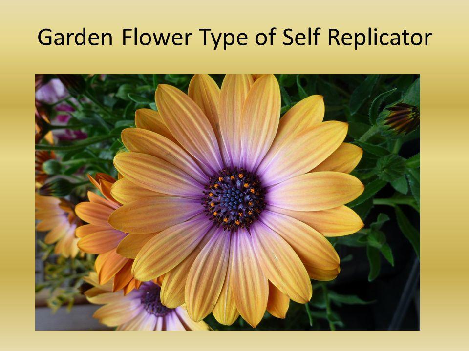 Garden Flower Type of Self Replicator