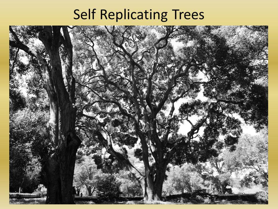 Self Replicating Trees