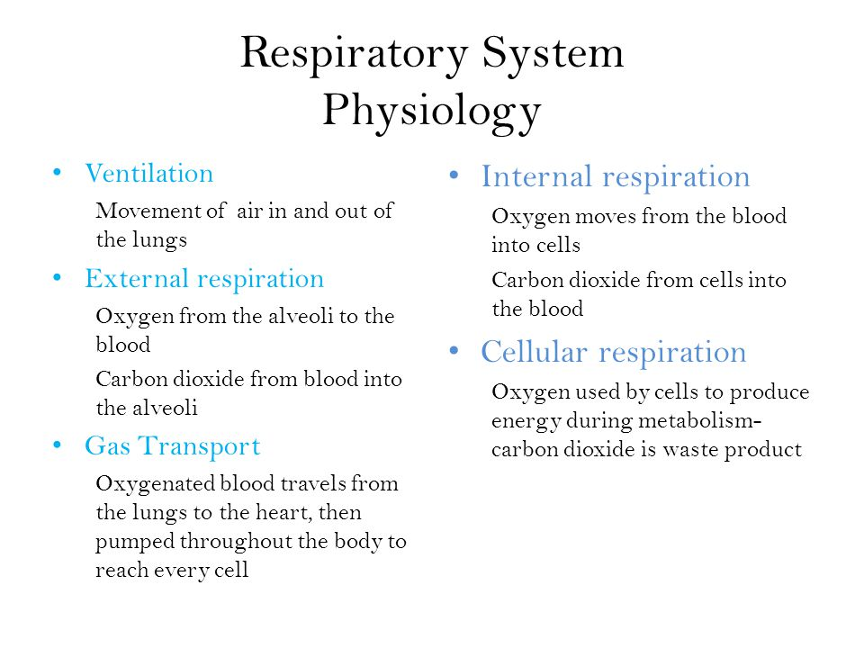 Respiratory System Physiology Ventilation Movement of air in and out of the lungs External respiration Oxygen from the alveoli to the blood Carbon dioxide from blood into the alveoli Gas Transport Oxygenated blood travels from the lungs to the heart, then pumped throughout the body to reach every cell Internal respiration Oxygen moves from the blood into cells Carbon dioxide from cells into the blood Cellular respiration Oxygen used by cells to produce energy during metabolism- carbon dioxide is waste product