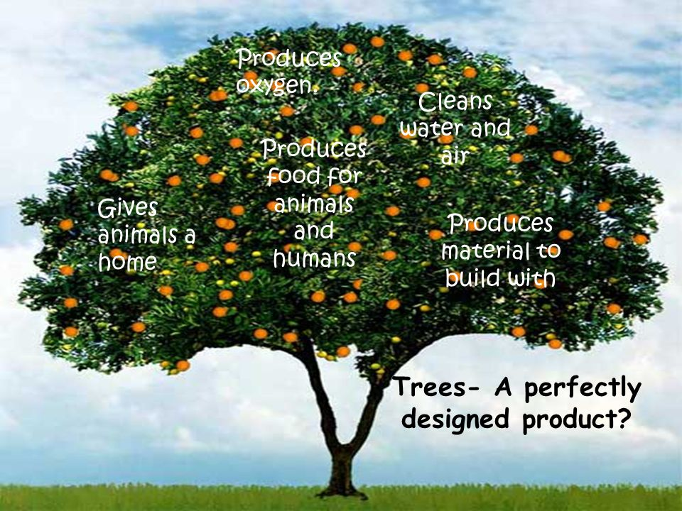Produces oxygen. Gives animals a home Cleans water and air Produces material to build with Produces food for animals and humans Trees- A perfectly des