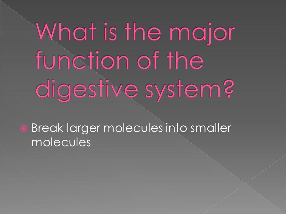  Break larger molecules into smaller molecules