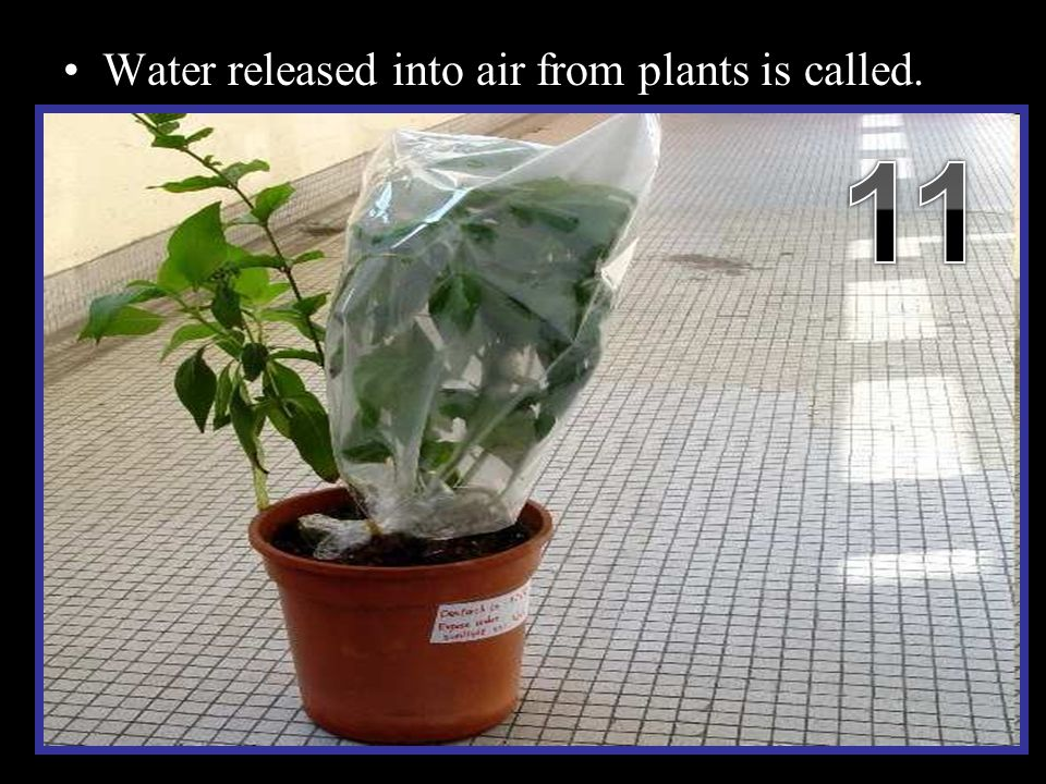 Water released into air from plants is called. –Place a clear plastic bag over a section of plant.