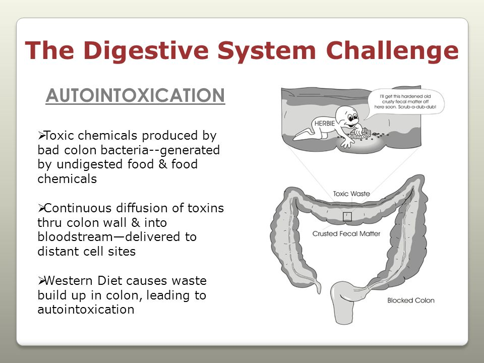 The Digestive System Challenge AUTOINTOXICATION  Toxic chemicals produced by bad colon bacteria--generated by undigested food & food chemicals  Continuous diffusion of toxins thru colon wall & into bloodstream—delivered to distant cell sites  Western Diet causes waste build up in colon, leading to autointoxication