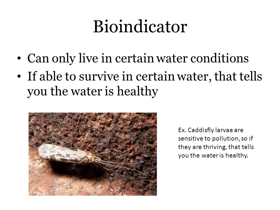 Bioindicator Can only live in certain water conditions If able to survive in certain water, that tells you the water is healthy Ex.
