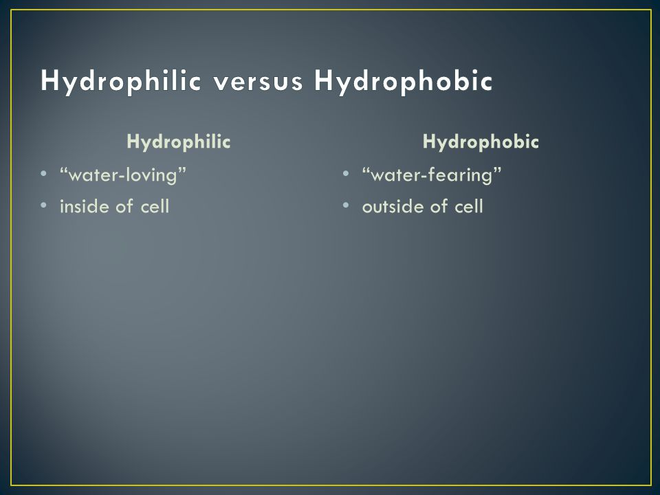 Hydrophilic water-loving inside of cell Hydrophobic water-fearing outside of cell