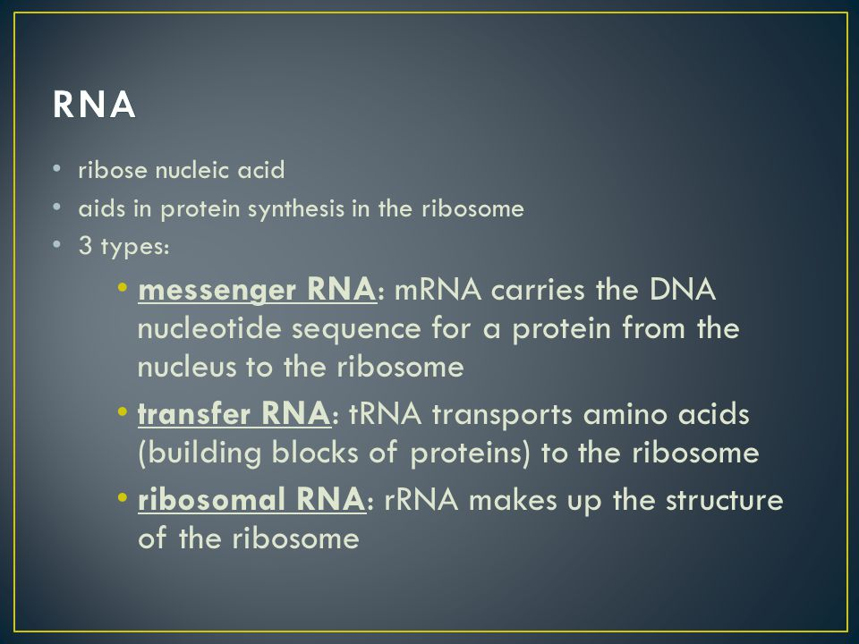 ribose nucleic acid aids in protein synthesis in the ribosome 3 types: messenger RNA: mRNA carries the DNA nucleotide sequence for a protein from the nucleus to the ribosome transfer RNA: tRNA transports amino acids (building blocks of proteins) to the ribosome ribosomal RNA: rRNA makes up the structure of the ribosome
