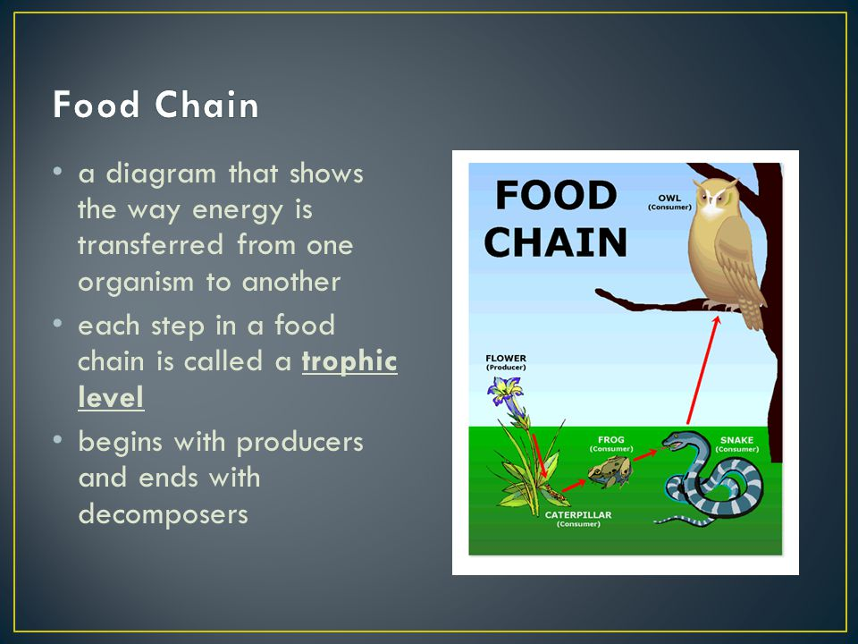 a diagram that shows the way energy is transferred from one organism to another each step in a food chain is called a trophic level begins with produc