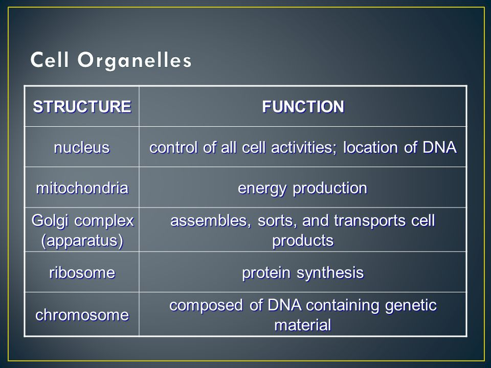 STRUCTUREFUNCTIONnucleus control of all cell activities; location of DNA mitochondria energy production Golgi complex (apparatus) assembles, sorts, an