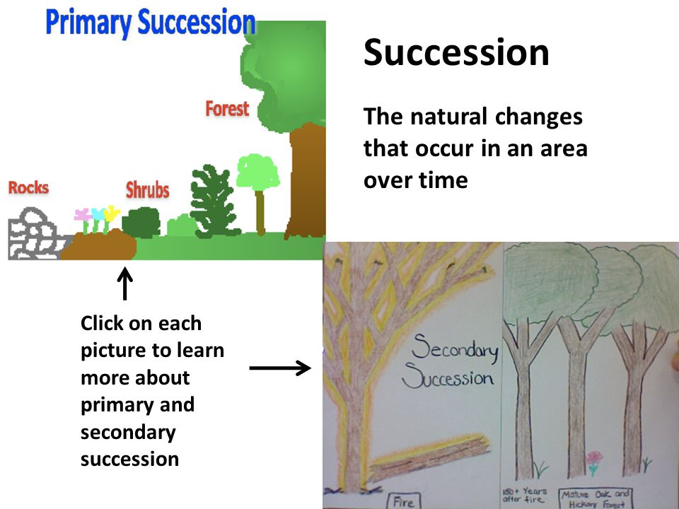 Click on the diagram to read an article about the carbon cycle and to complete the carbon cycle assignment sheet Click on the button below to play the carbon cycle game The Carbon Cycle Click here to return to the main menu start