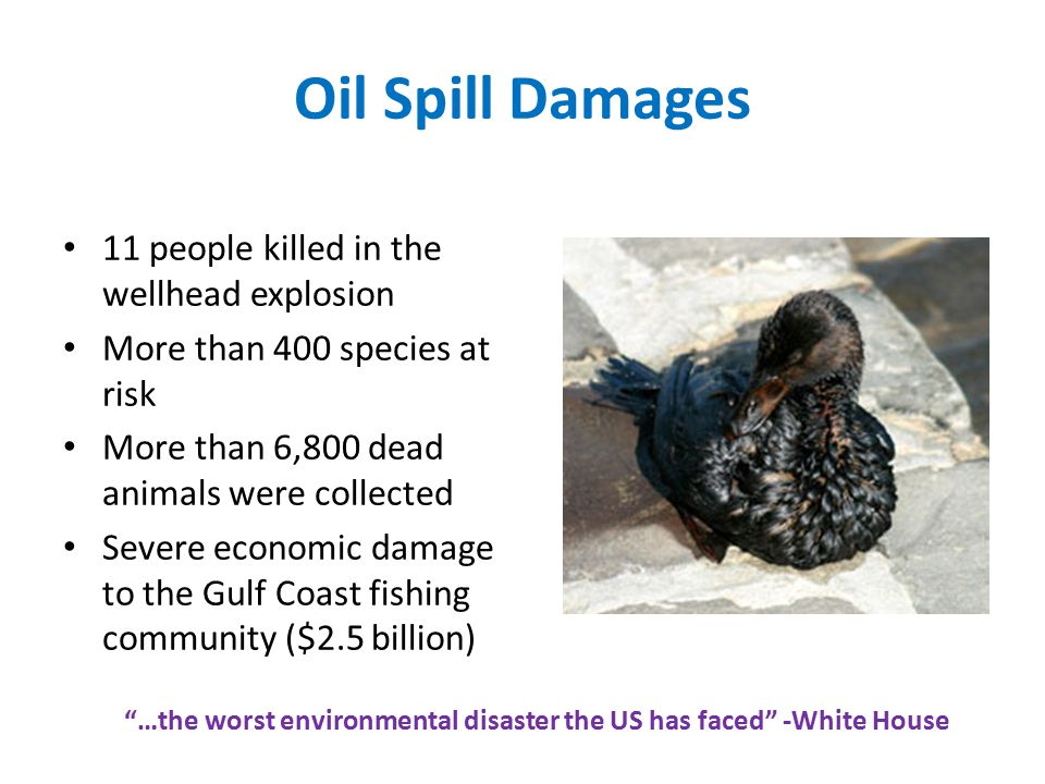 Oil Spill Damages 11 people killed in the wellhead explosion More than 400 species at risk More than 6,800 dead animals were collected Severe economic damage to the Gulf Coast fishing community ($2.5 billion) …the worst environmental disaster the US has faced -White House