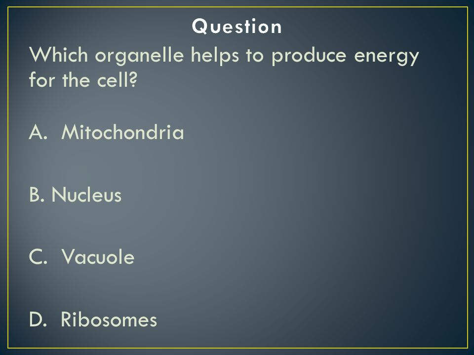Which organelle helps to produce energy for the cell? A. Mitochondria B. Nucleus C. Vacuole D. Ribosomes