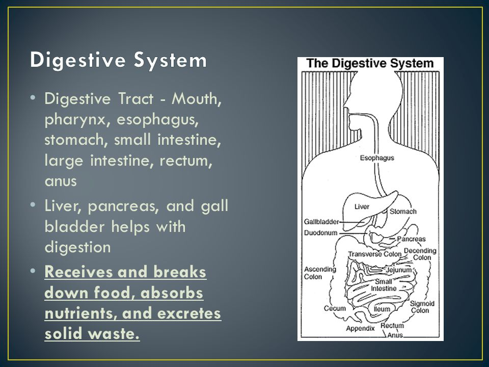 Digestive Tract - Mouth, pharynx, esophagus, stomach, small intestine, large intestine, rectum, anus Liver, pancreas, and gall bladder helps with dige