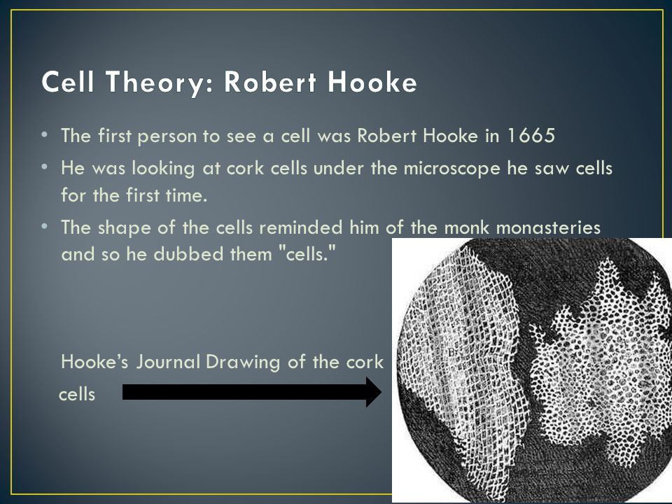 The first person to see a cell was Robert Hooke in 1665 He was looking at cork cells under the microscope he saw cells for the first time. The shape o