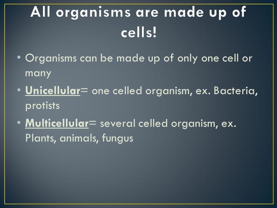 Organisms can be made up of only one cell or many Unicellular= one celled organism, ex. Bacteria, protists Multicellular= several celled organism, ex.