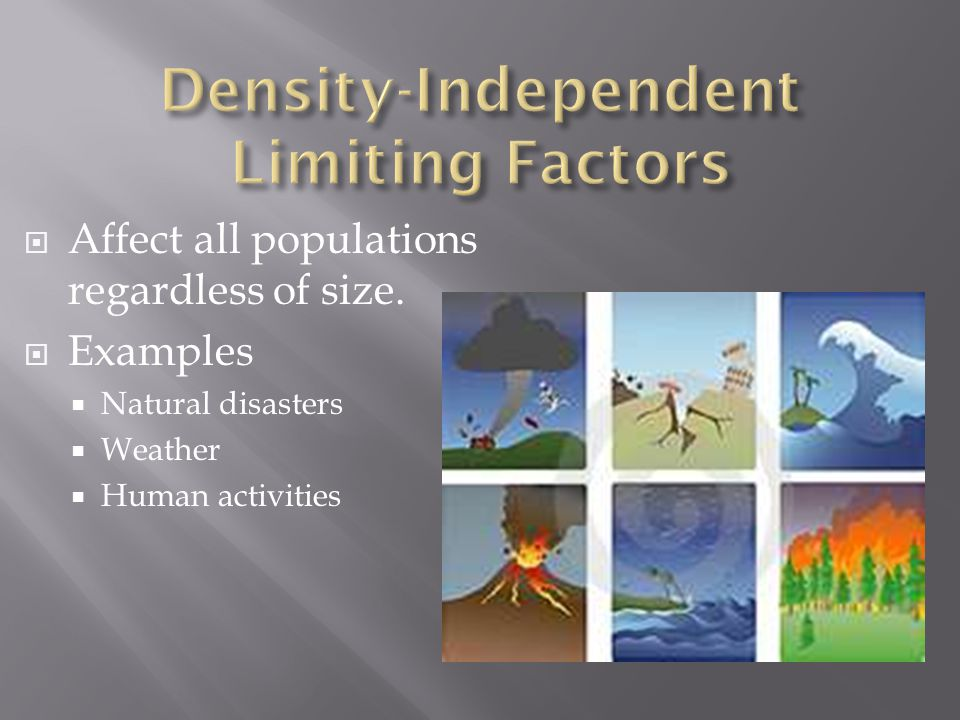  Factors that depend on the size of a population  Examples:  Competition  Predation  Parasitism  Disease