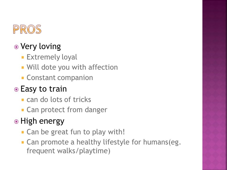  Very loving  Extremely loyal  Will dote you with affection  Constant companion  Easy to train  can do lots of tricks  Can protect from danger  High energy  Can be great fun to play with.