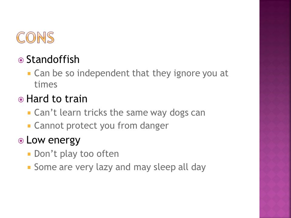  Standoffish  Can be so independent that they ignore you at times  Hard to train  Can't learn tricks the same way dogs can  Cannot protect you from danger  Low energy  Don't play too often  Some are very lazy and may sleep all day