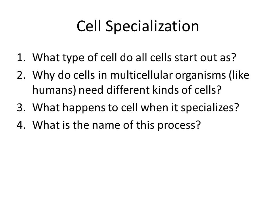 Types of cells Identify each of the following types of cells: