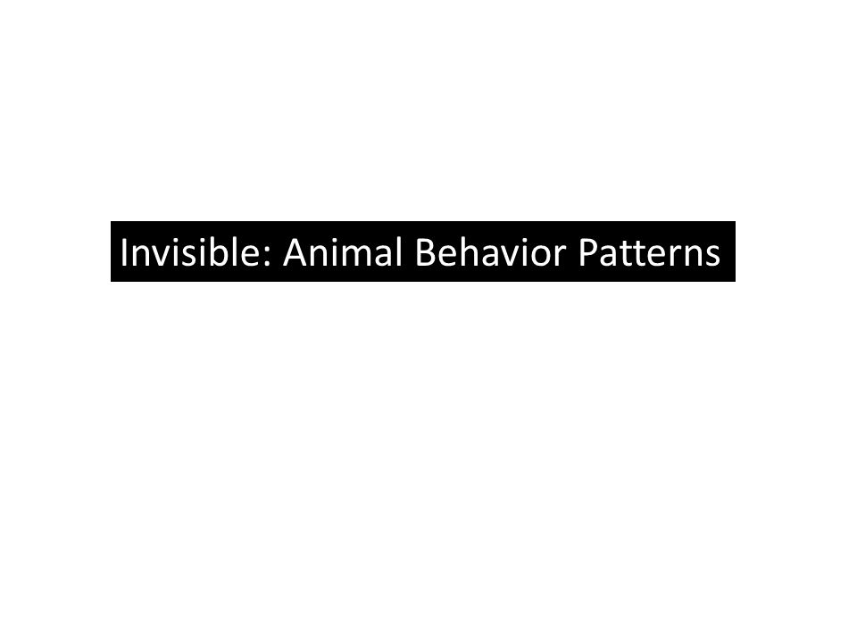 Invisible: Animal Behavior Patterns