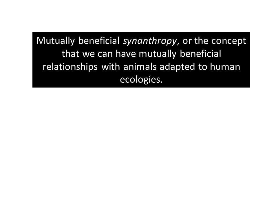 Mutually beneficial synanthropy, or the concept that we can have mutually beneficial relationships with animals adapted to human ecologies.