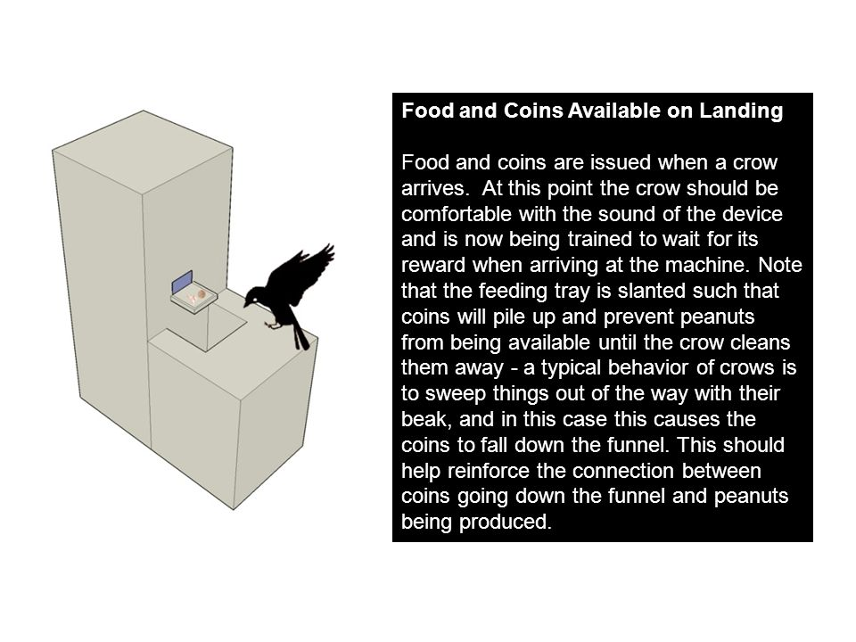 Food and Coins Available on Landing Food and coins are issued when a crow arrives.