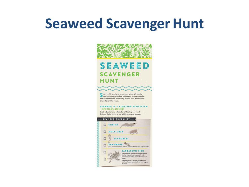 Seaweed Scavenger Hunt