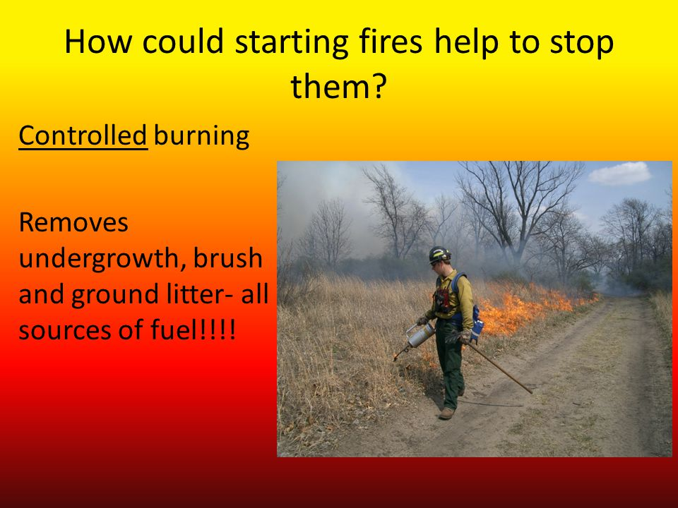 How could starting fires help to stop them.