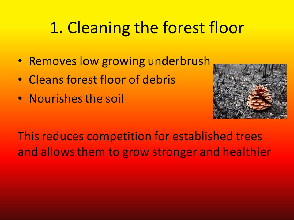 1. Cleaning the forest floor Removes low growing underbrush Cleans forest floor of debris Nourishes the soil This reduces competition for established
