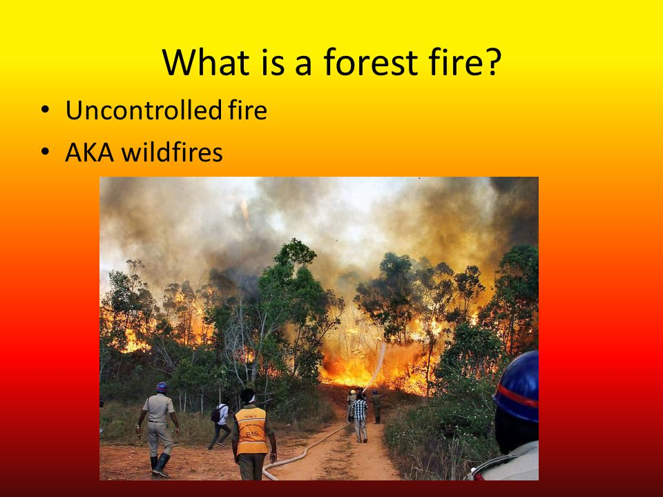 What is a forest fire? Uncontrolled fire AKA wildfires