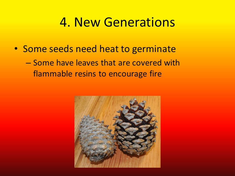 4. New Generations Some seeds need heat to germinate – Some have leaves that are covered with flammable resins to encourage fire