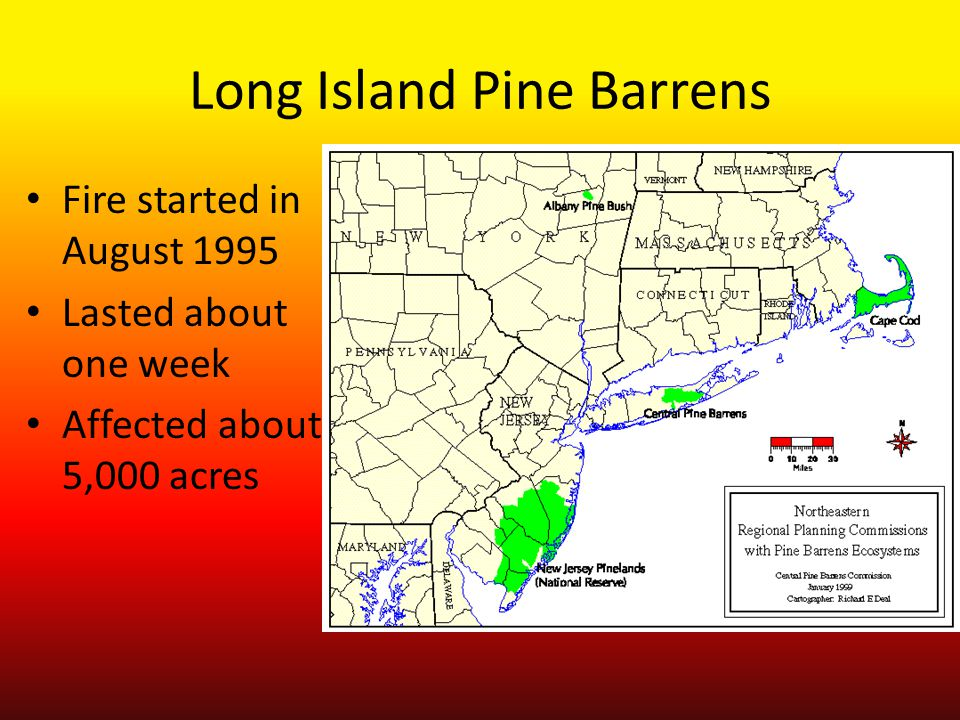 Long Island Pine Barrens Fire started in August 1995 Lasted about one week Affected about 5,000 acres