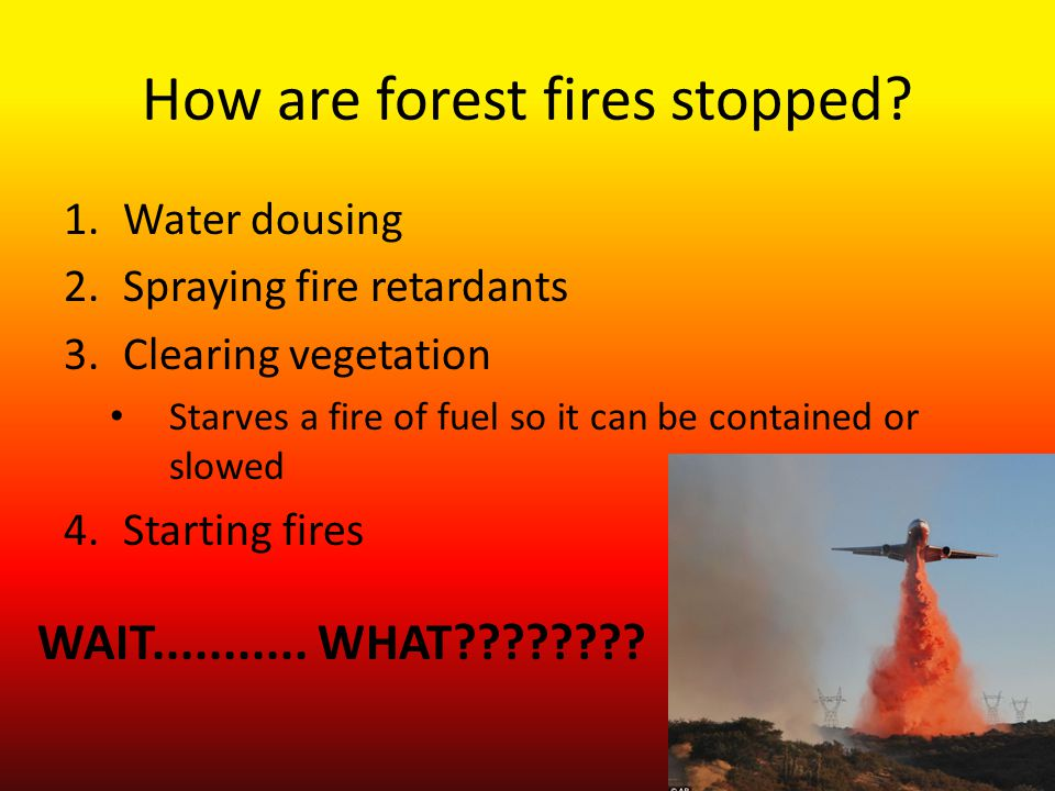 How are forest fires stopped.