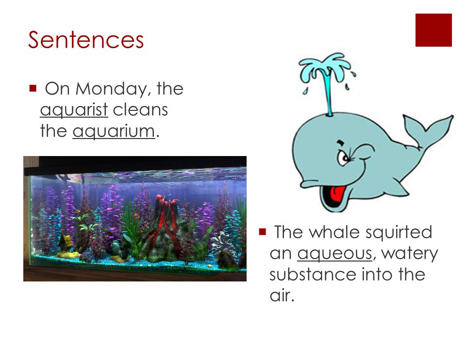 Sentences  On Monday, the aquarist cleans the aquarium.
