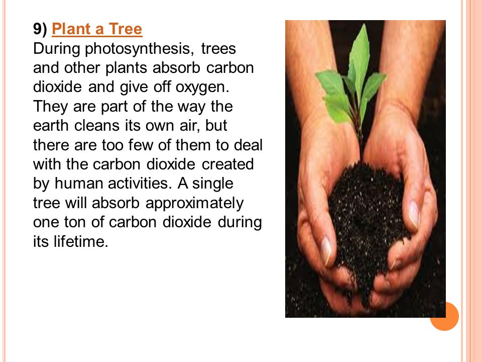 9) Plant a TreePlant a Tree During photosynthesis, trees and other plants absorb carbon dioxide and give off oxygen.