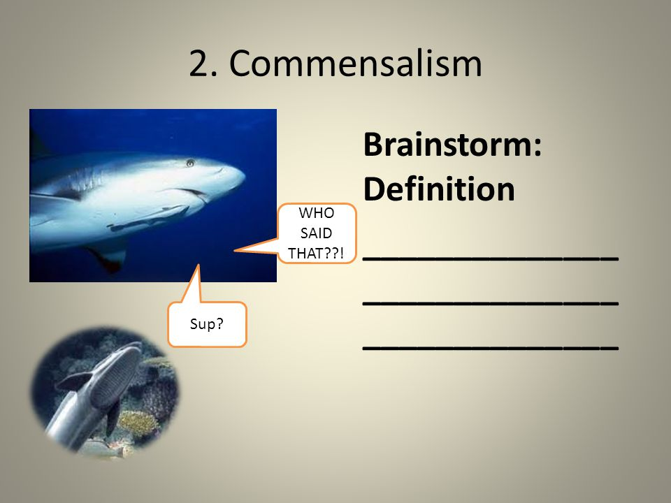 2. Commensalism Brainstorm: Definition ______________ ______________ ______________ Sup.