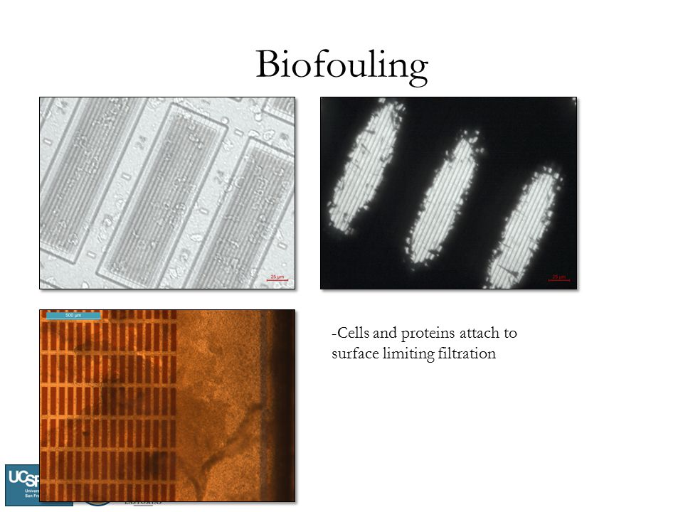 Biofouling -Cells and proteins attach to surface limiting filtration