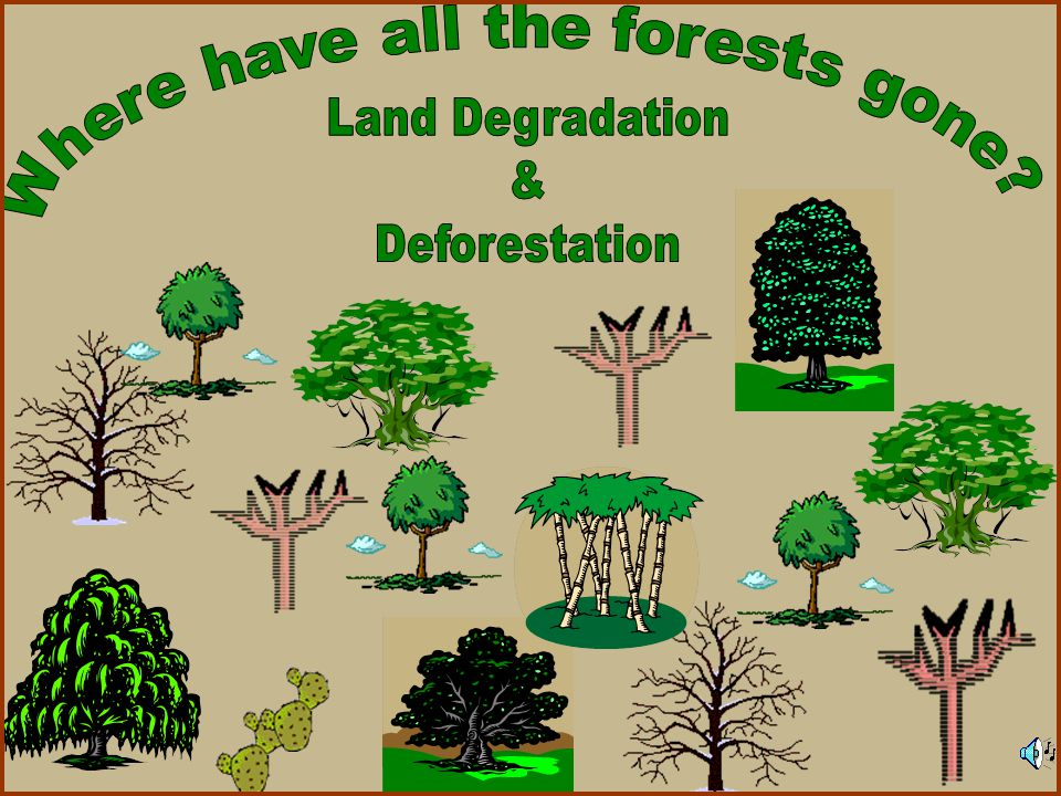 WHAT IS AFFORESTATION.