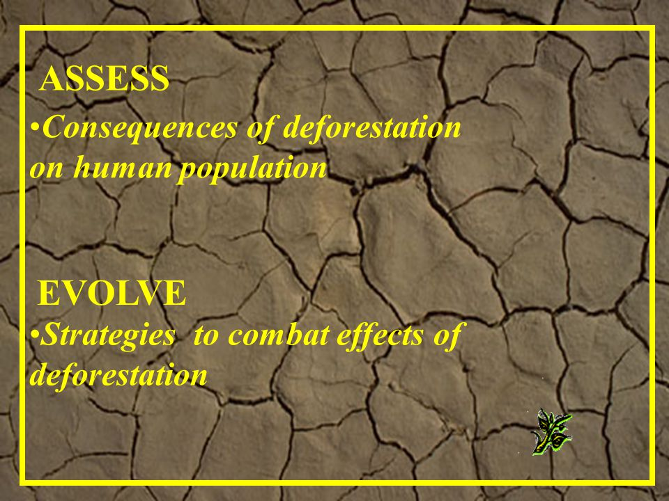 Strategies to combat effects of deforestation EVOLVE ASSESS Consequences of deforestation on human population