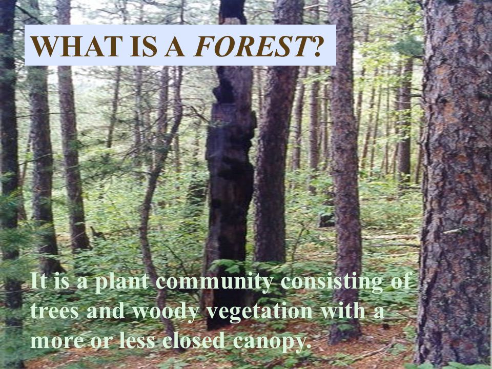 WHAT IS A FOREST? It is a plant community consisting of trees and woody vegetation with a more or less closed canopy.