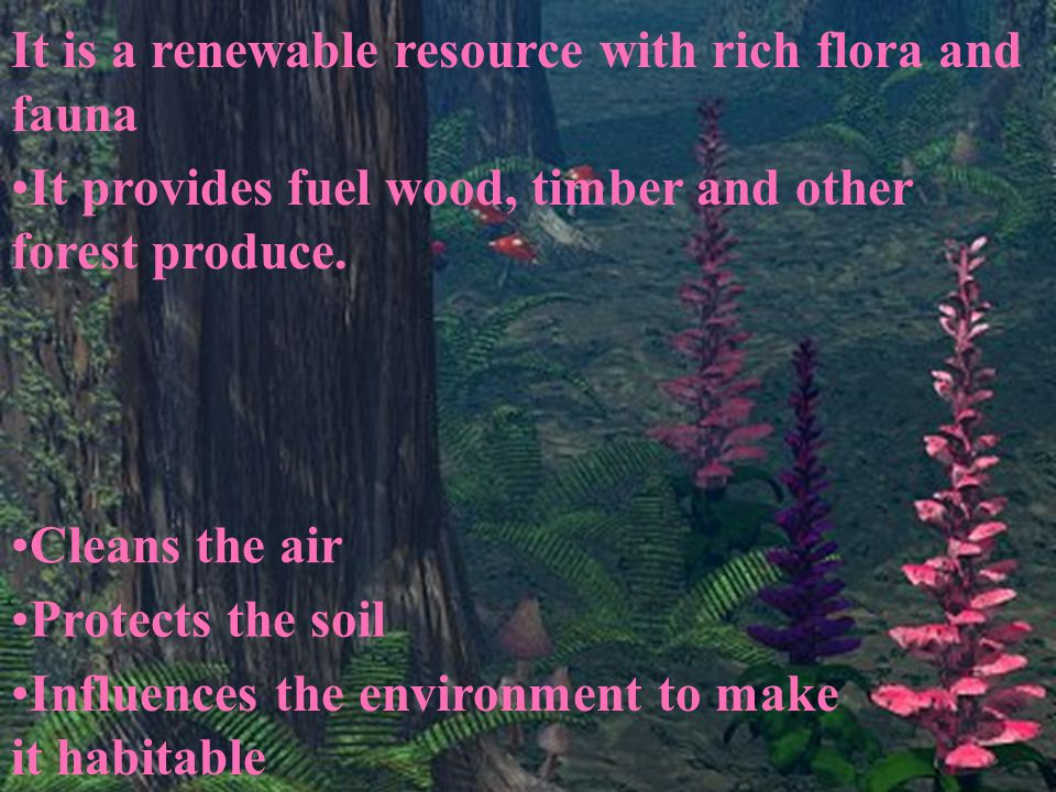 It is a renewable resource with rich flora and fauna It provides fuel wood, timber and other forest produce. Cleans the air Protects the soil Influenc