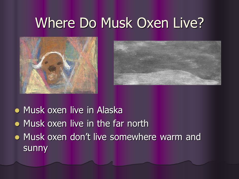 Where Do Musk Oxen Live? Musk oxen live in Alaska Musk oxen live in Alaska Musk oxen live in the far north Musk oxen live in the far north Musk oxen d