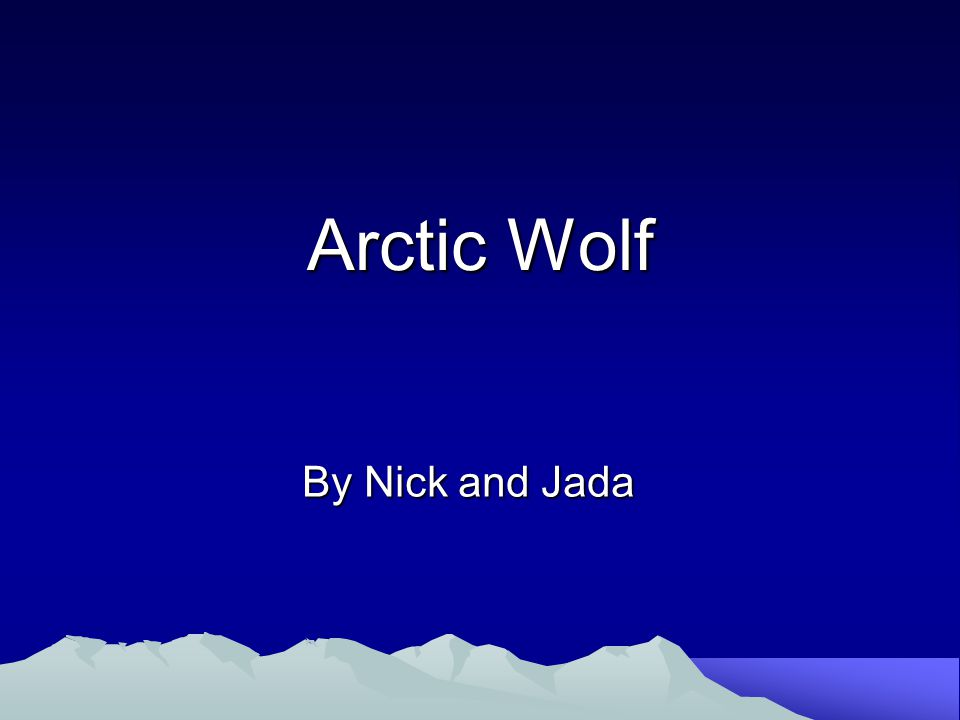 Arctic Wolf By Nick and Jada