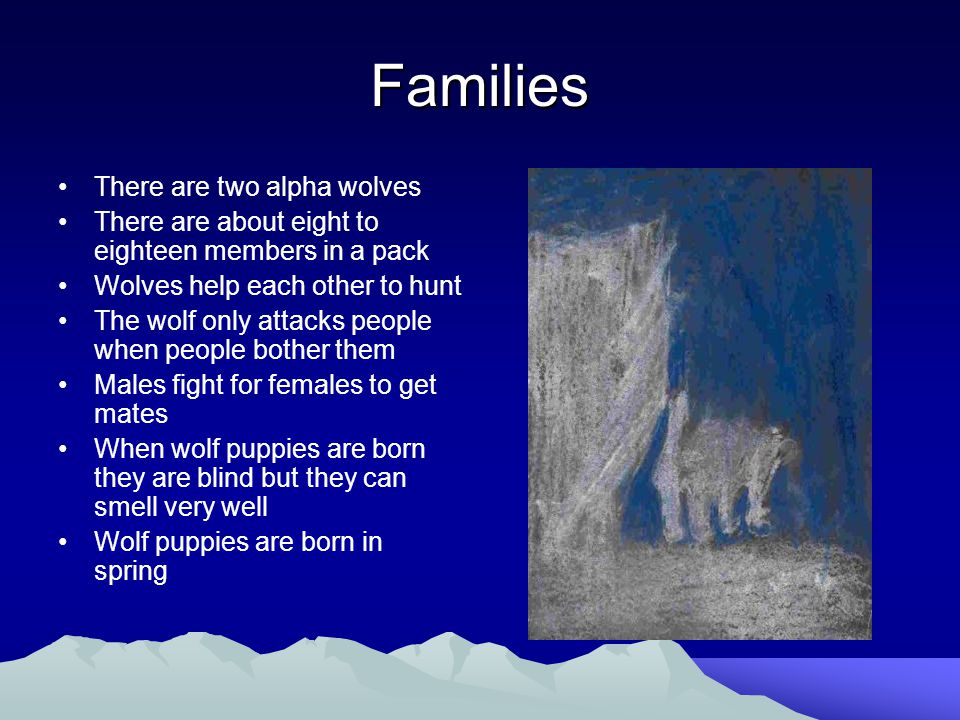 Families There are two alpha wolves There are about eight to eighteen members in a pack Wolves help each other to hunt The wolf only attacks people when people bother them Males fight for females to get mates When wolf puppies are born they are blind but they can smell very well Wolf puppies are born in spring