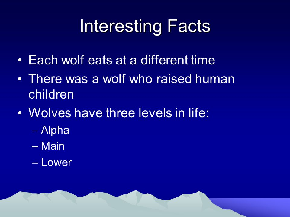 Interesting Facts Each wolf eats at a different time There was a wolf who raised human children Wolves have three levels in life: –Alpha –Main –Lower