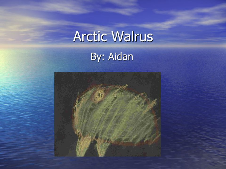 Arctic Walrus By: Aidan
