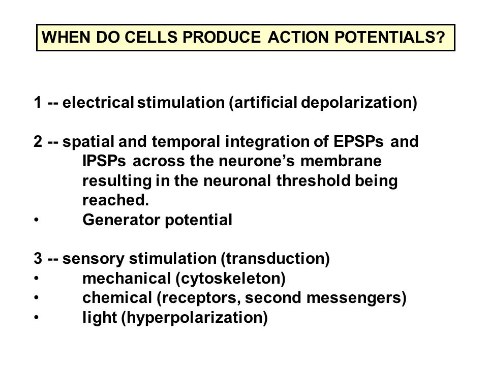 1 -- electrical stimulation (artificial depolarization) 2 -- spatial and temporal integration of EPSPs and IPSPs across the neurone's membrane resulting in the neuronal threshold being reached.