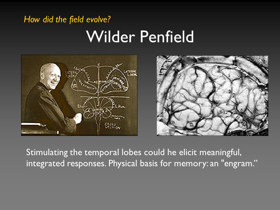 Stimulating the temporal lobes could he elicit meaningful, integrated responses. Physical basis for memory: an