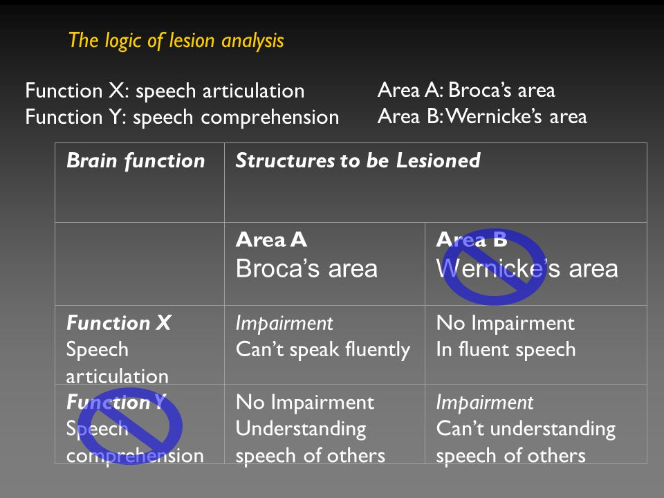 Function X (articulation of speech) depends on area A (Broca's area) but not area B, whereas function Y (comprehending speech) depends on area B (Wernicke's area) but not area A.
