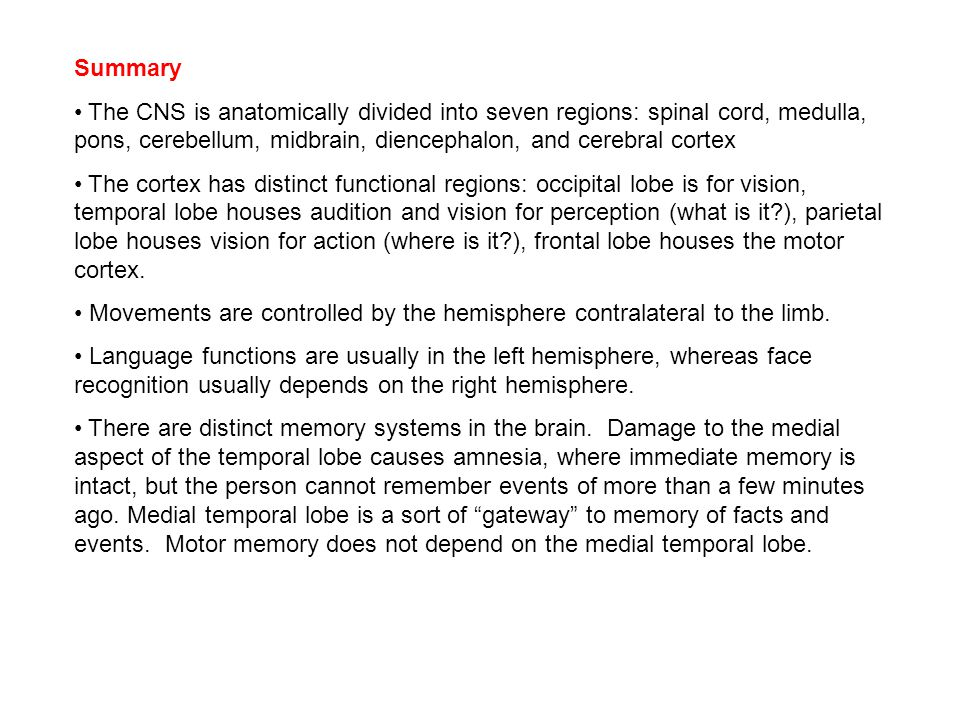 Summary The CNS is anatomically divided into seven regions: spinal cord, medulla, pons, cerebellum, midbrain, diencephalon, and cerebral cortex The cortex has distinct functional regions: occipital lobe is for vision, temporal lobe houses audition and vision for perception (what is it ), parietal lobe houses vision for action (where is it ), frontal lobe houses the motor cortex.